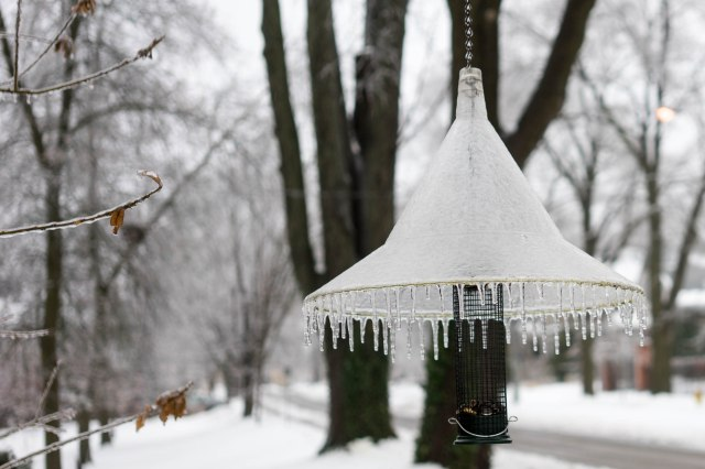 Frozen bird feeder (lamp shade?)