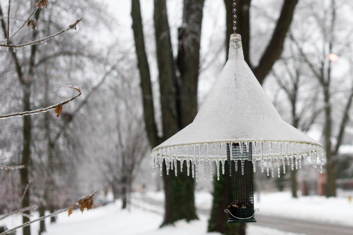 Frozen bird feeder (lamp shade?)