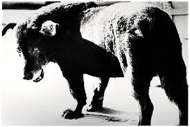 Daido Moriyama, Stray dog, Misawa, 1971
